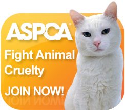 ASPCA - Fight Animal Cruelty