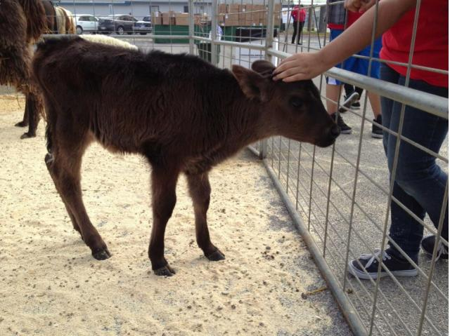 This is the calf we made friends with at the petting zoo while we waited for the families to enter the campus.